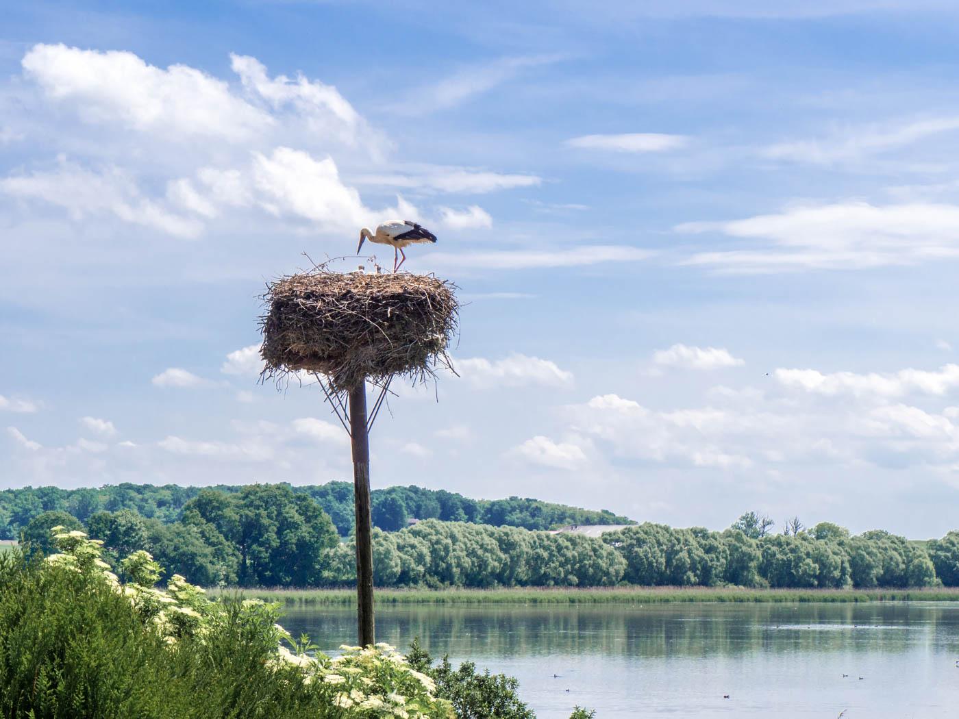 Storch in Lothringen
