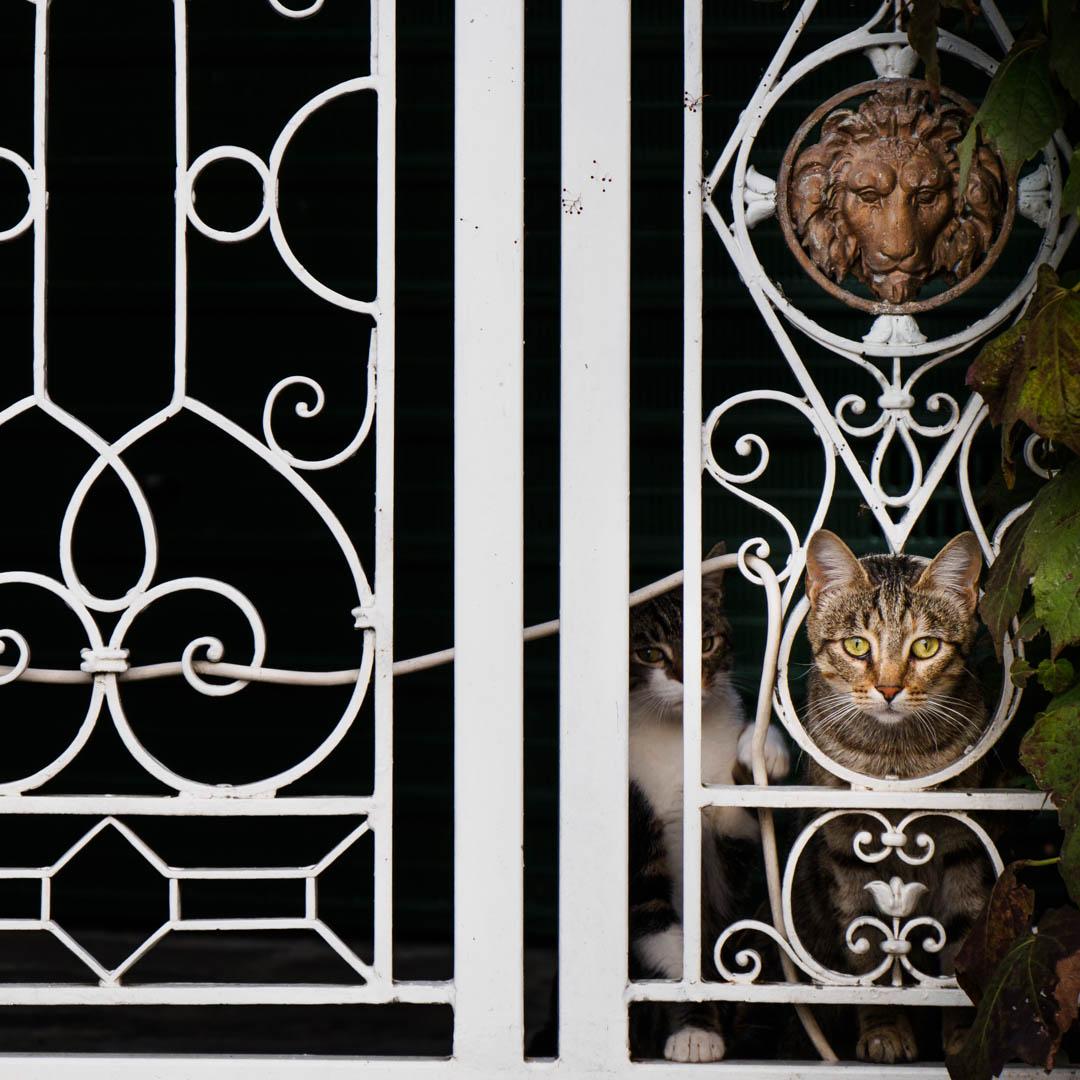 Katzen Italien