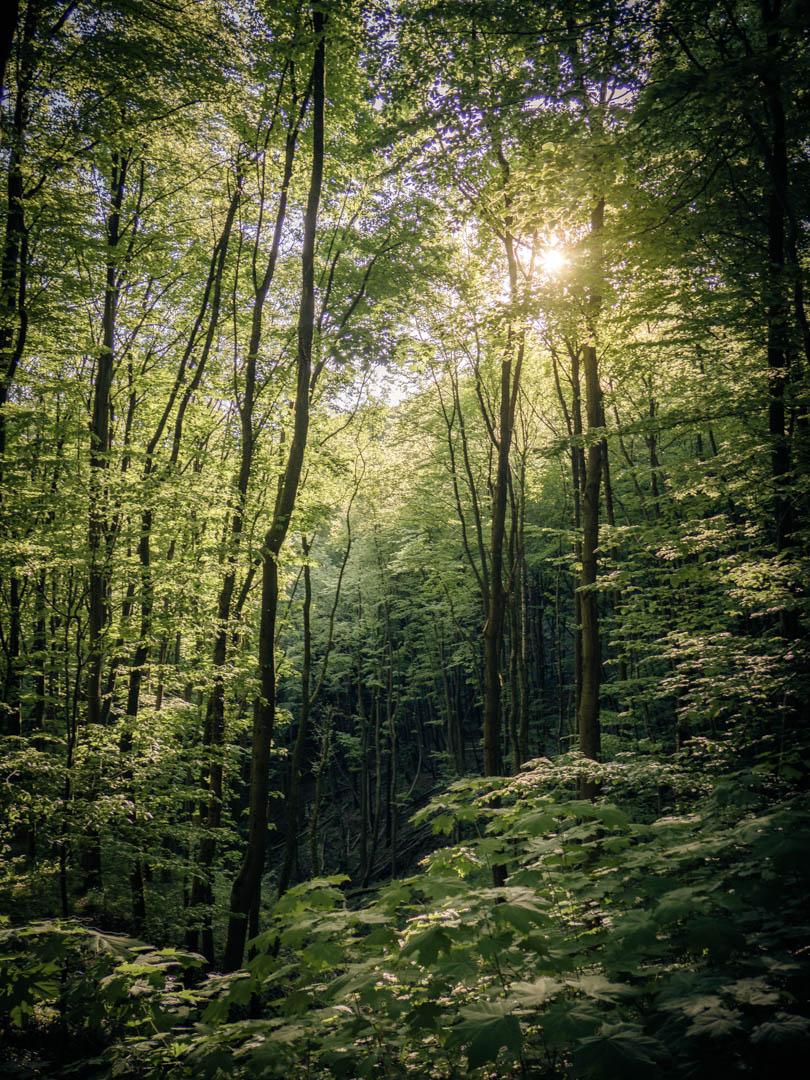 Wald und Sonne