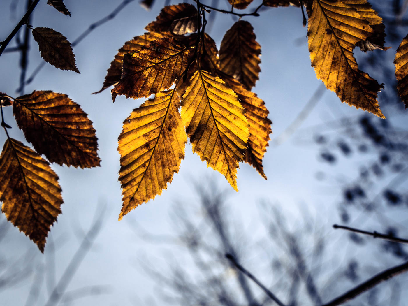 November - Blätter