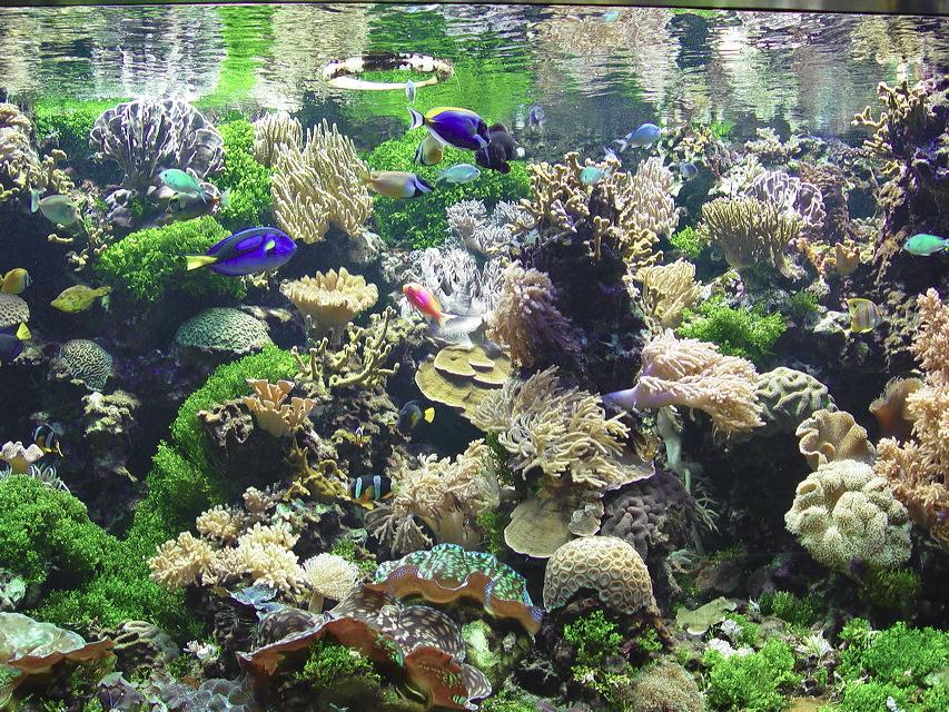 natur tiere pflanzen aquarium fische bild 37 von 87. Black Bedroom Furniture Sets. Home Design Ideas