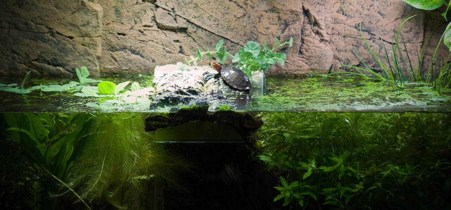schild kröten